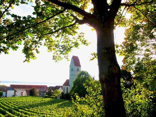Weinberge und Dorfkirche von Hagnau am Bodensee