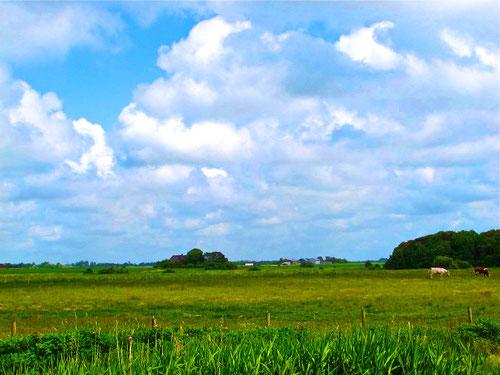 ein Nolde Motiv: tiefliegende Horizont-Linie über das sich ein imposantes Wolkengebilde wölbt....