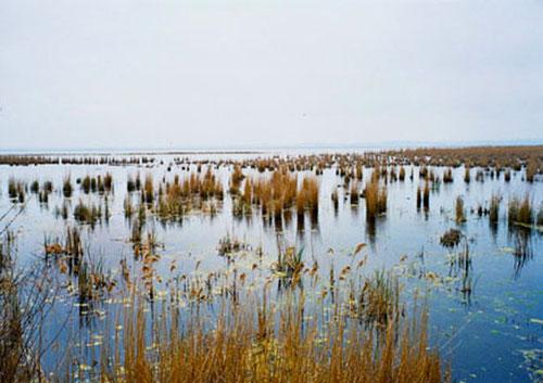 am Ufer - kilometerlange Schilf-Felder - ein ideales Nist-Gebiet unzähliger Vogelarten