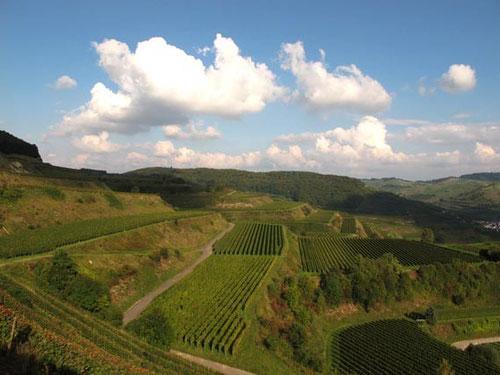 ein paradisischer Ausblick - hinüber zum südlichen Schwarzwald