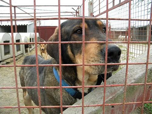 In Gedenken an einen der beindruckensten Hunde unserer Tierschutzarbeit