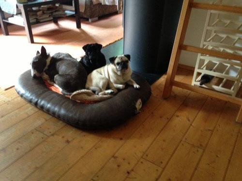 Lilly, Mirage und Abby heißen diese süßen Schätze!
