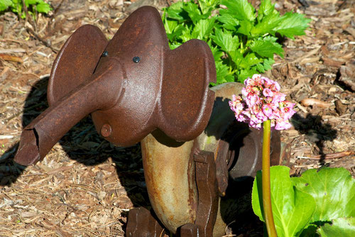 An elephant sculpture made from found metal objects, next to Bergenia cordifolia, commonly known as Elephant's Ear.