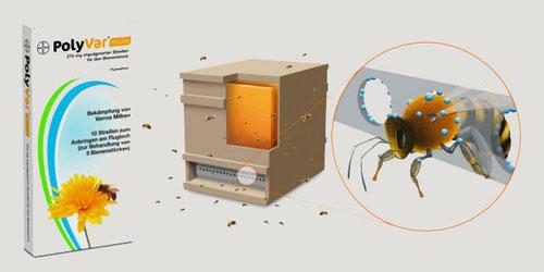 polyvar varroa