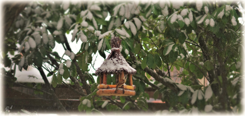 Ein buntes Treiben bei den Futterstellen im Garten (hier: Ein Sperlingsmännchen)