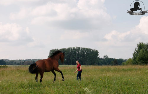 Freiarbeit, Kurs, Horsemanship, freies Reiten, Verladetraining