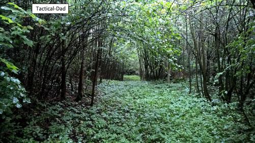 Auch dieser faszinierende Wald ist in meinem Revier.