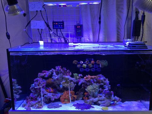 900サイズオーバーフロー水槽 DEP-8000 水中ポンプ DCポンプ 静か 大流量