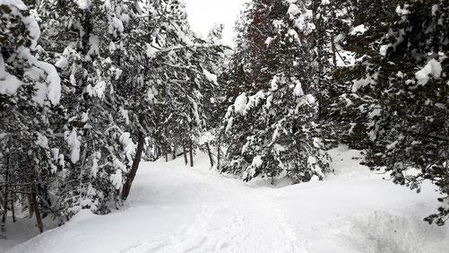 Raquetes de neu pel bosc coll de pam