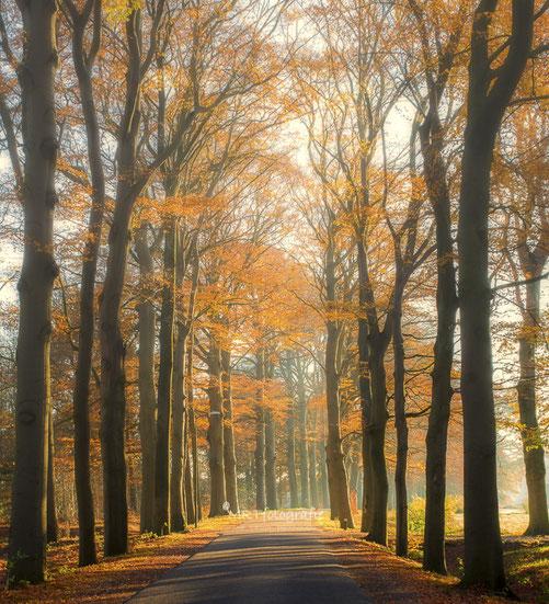 Laatste nevel wordt door de zon verdreven in herfstbos met oranje gekleurd blad