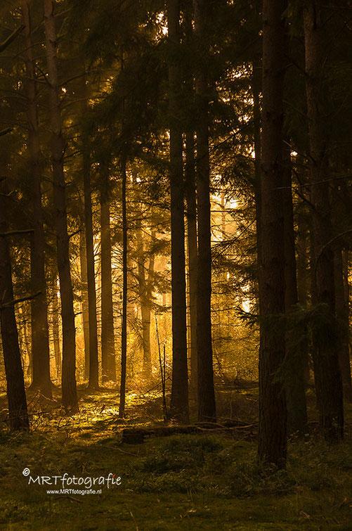 De gloed van ondergaande zon in het bos