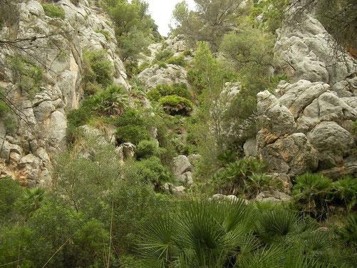 Habitat van Balearenvroedmeesterpad