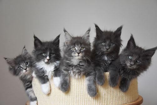 ehemalige Kitten von unserem J-Wurf