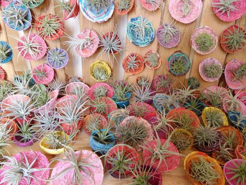 plantes sans terre, filles de l'air, dans de coques en matières textiles recyclées