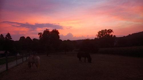 Morgens um 05.45 Uhr läßt es sich auf der Weide noch aushalten. ;-)