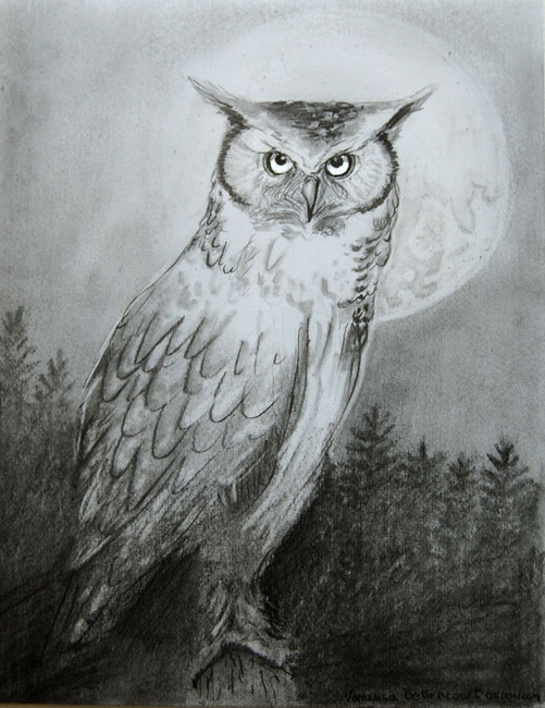 owl traditional drawing myth illustration