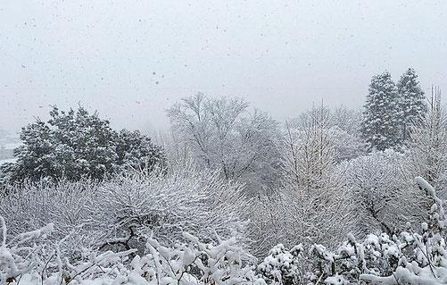 先日降った雪の時、家の近くの公園の写真です。