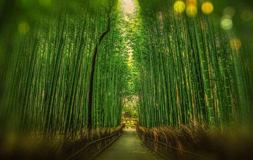Bambusplantage für nachhaltige Kleidung
