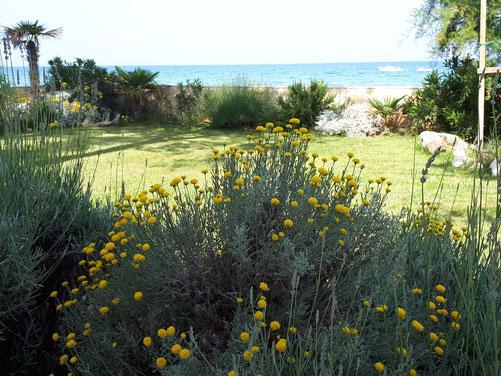 Der mediterrane Naturgarten