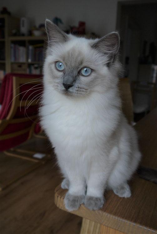 Peaches mit fast 5 Monaten - schon fast eine junge Dame :)