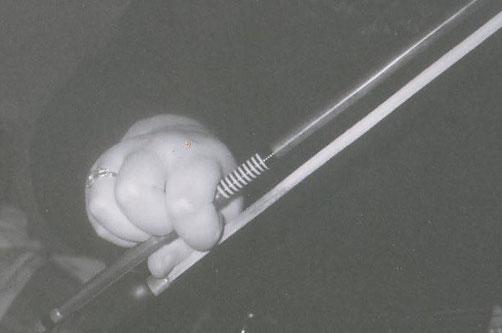 バイオリン 弓の持ち方