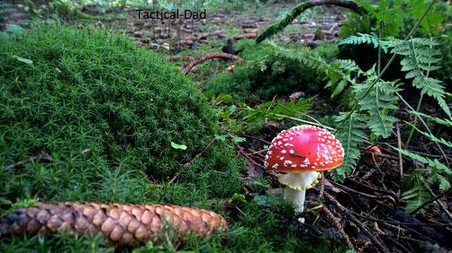 Diesen Pilz wird sicher jeder hier kennen ;-)
