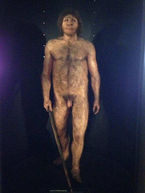 Miguelón, el heidelbergensis de Atapuerca.