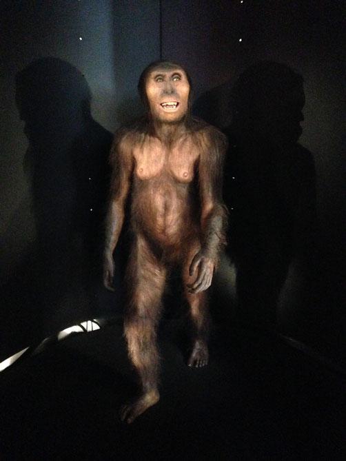 Reproducción de Lucy, la más famosa autralopitecus afarensis.