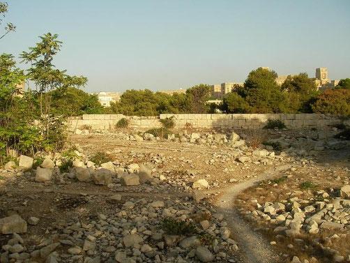 Habitat van Algerijnse toornslang.