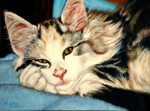 Pearl die Katzendame