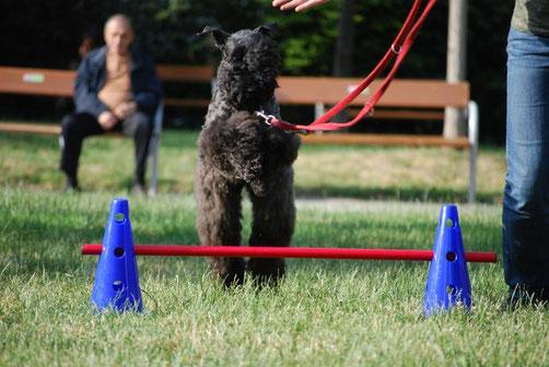 Agility Hundetraining Linz Neuhofen Hundeschule