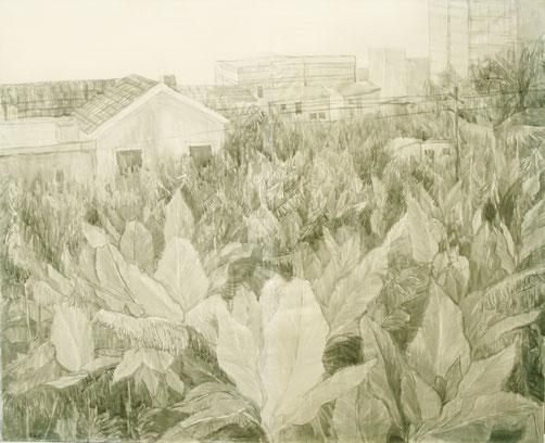 bananeplantage, Tusche auf Papier, 100 x 90 cm