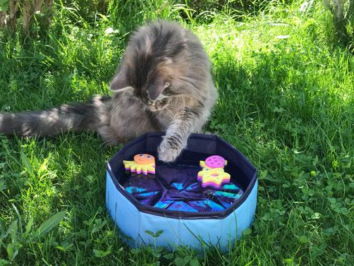 Kitty Pool für heisse Tage