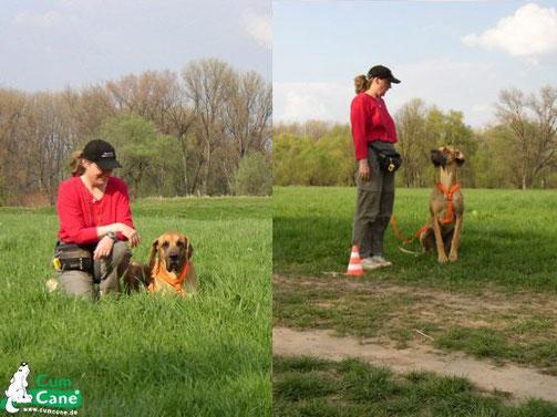Anja Kiefer und ihre Dogge Amber beim wöchentlichen Training auf den Rheinwiesen