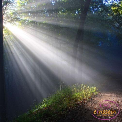 Bild: canva.com, Günther Dillingen pixabay