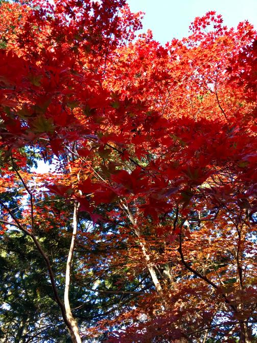 今回の旅も最高でした!京都の秋満喫のレポートは、別の機会にゆっくり書きますね~♪