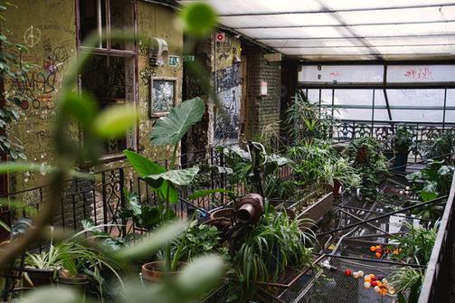 Szimpla Kert in Budapest. Mit Pflanzen bewachachsener  Innenhof.