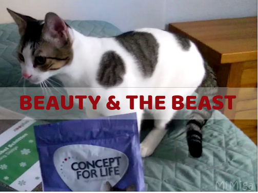 beauty-and-the-beast-phibï-pienso-concept-for-life-gatos-zooplus
