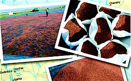 Gammarus Trocknung ist einer der wichtigsten Arbeitsprozesse. Von der richtigen Trocknung hängt die Gammarus Qualität und die Haltbarkeit ab.