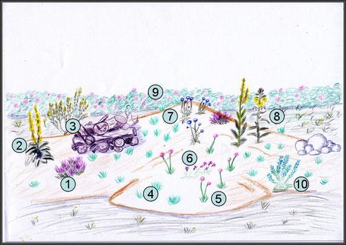 Sandiges Trockenbiotop mit typischen Pflanzenarten