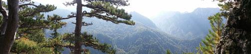 Blick über den Perućica-Urwald