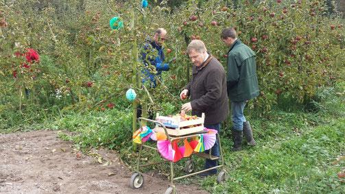 Wethouder Bragt plukt eerste kistje appels