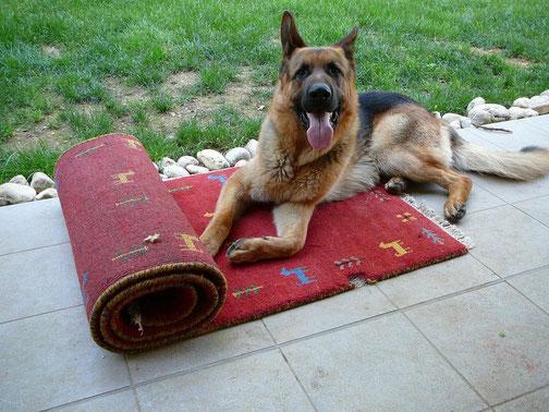 Pordenone- Tabriz carpet Udine di zarepour via molin nuovo, pipi cane, e gatto sul tappeto, odore, buco