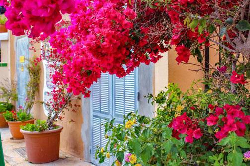 Mallorca, Spanien, Balearen, Reisetipps, Highlights, Die Traumreiser, Alcúdia, Altstadt