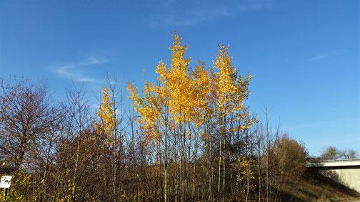 Noch hat der Herbst nicht alle Blätter geraubt...