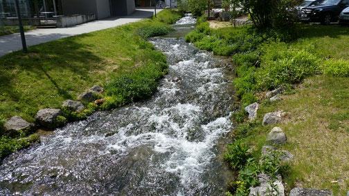 Die Lauter - ca. 4 km nach der Quelle...