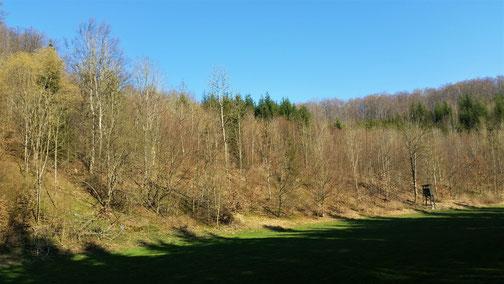 Im Vögelestal fehlen noch die Blätter an den Bäumen... Die Grünen sind Weihnachtsbäume...