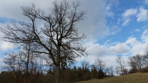 Es wird Zeit, dass die Blätter wieder an die Bäume kommen...
