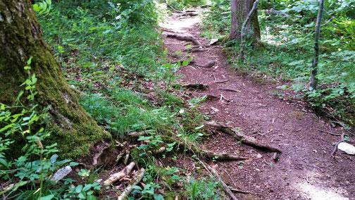 Auf dem Degginger Berg werden die Wurzeln immer grösser...