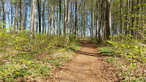 Wunderbar weicher Waldboden - herrlich...
